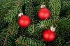 Tre sfere rosse dell'albero di Natale sulle filiali dell'abete fotografia stock libera da diritti