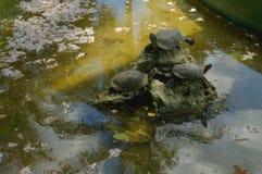 Tre sköldpaddor Royaltyfri Foto