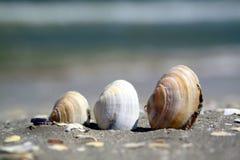 Tre skal på en strand Arkivbilder