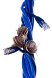 Tre snails på blåttkablar Arkivfoton