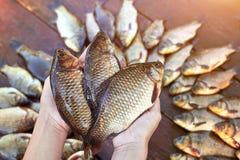 Tre sono pesci pescati freschi del fiume in mani Pesce pescato della carpa su legno Pesce di acqua dolce di cattura su fondo di l Fotografia Stock Libera da Diritti