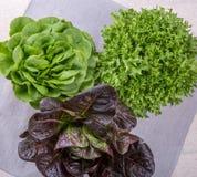 Tre sorter av grönsallat Arkivbild