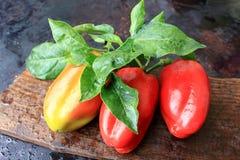 Tre spansk peppar på träbakgrund Arkivfoton