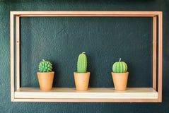 Tre stearinljus som gjutas i olika sorter av kaktuns, planterar att förlägga royaltyfria foton