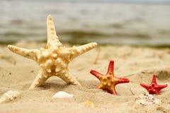 Tre stelle di mare in primo piano di colore giallo e rosso delle dimensioni differenti si trovano sui precedenti della sabbia Fotografia Stock Libera da Diritti