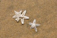 Tre stelle marine Fotografia Stock Libera da Diritti