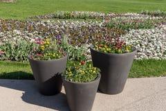 Tre stora planters med att blomma blommar i parkera royaltyfria bilder