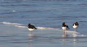 Tre strandskator Royaltyfria Foton