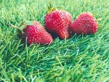 Tre strawberrys på gräset Arkivfoton