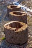 Tre stubbar på kiselstenar Arkivfoto