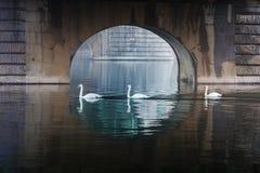 tre svanar under bron royaltyfri bild