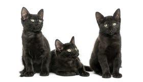 Tre svarta kattungar som bort ser, 2 gamla månader, isolerat Arkivfoto