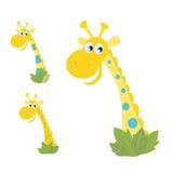 Tre teste gialle della giraffa isolate su bianco Immagini Stock