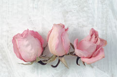 Tre teste rosa secche su fondo dipinto bianco Immagini Stock