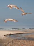 Tre Thayers Seagulls Arkivbild
