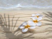 Tre tiareblommor på stranden Royaltyfria Foton