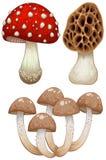 Tre tipi di funghi selvaggi Fotografia Stock