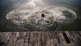 Tre tipi fanno una capriola le loro parti posteriori che saltano l'acqua archivi video