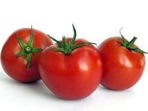 tre tomater Fotografering för Bildbyråer