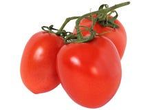 Tre tomater Royaltyfri Bild