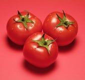 Tre tomater på rött Arkivbilder