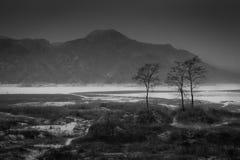 Tre träd Arkivfoto