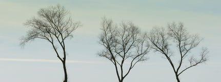 Tre träd-blast i himlen royaltyfria bilder