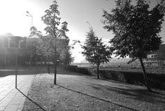 Tre träd i staden royaltyfria foton