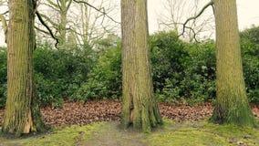 tre trees Fotografering för Bildbyråer