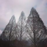 tre trees Royaltyfri Foto