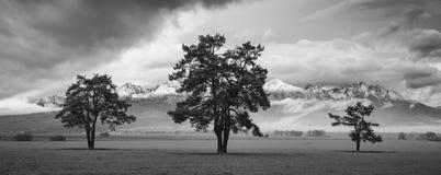 tre trees Arkivfoton