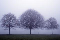 Tre trees i misten Fotografering för Bildbyråer
