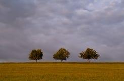 Tre trees på horisont Arkivfoto