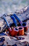 Tre tubi lisci del rovo all'aperto Fotografia Stock Libera da Diritti