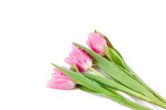 Tre tulipani rosa fotografia stock libera da diritti