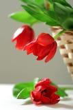 Tre tulipani rossi in cestino Fotografie Stock