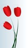 Tre tulipani rossi del raso Fotografie Stock