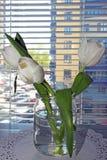 Tre tulipani in un barattolo di vetro con acqua sulla finestra con i ciechi fotografia stock libera da diritti