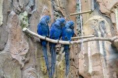 Tre uccelli Fotografie Stock