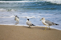 Tre uccelli che fanno l'opposto fotografia stock libera da diritti