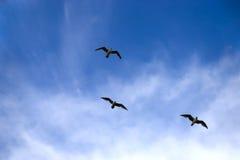 Tre uccelli che volano su una priorità bassa del cielo blu Fotografia Stock Libera da Diritti