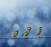 Tre uccelli del titmouse in inverno fotografie stock