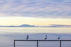 Tre uccelli marini si pavoneggiano sul recintare obvlious a vista sul mare splendida dietro Immagine Stock