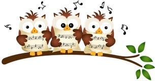 Tre ugglor sjunga i kör att sjunga Arkivfoton
