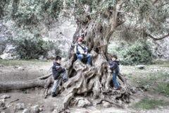 Tre unga barn som spelar på ett knotigt träd Royaltyfri Bild