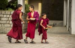 Tre unga buddistiska munkar Royaltyfri Bild