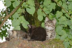 Tre unga lösa katter Arkivfoton