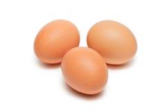 Tre uova animali Fotografia Stock Libera da Diritti