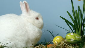 Tre uova di Pasqua che cadono davanti ad un coniglietto bianco sveglio archivi video