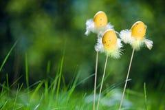 Tre uova di Pasqua Su un'erba verde fresca Fotografia Stock Libera da Diritti